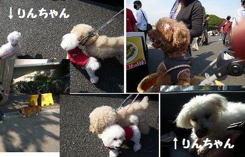 1011yamasitafesu11-1.jpg