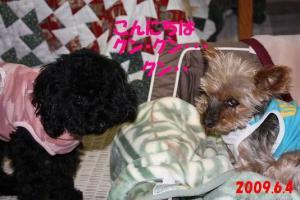 070_convert_20090604220106.jpg