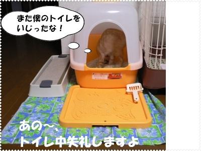 P1000575(2)トイレ1