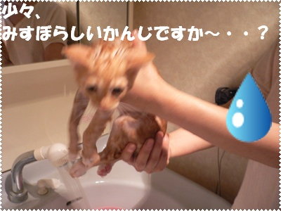 P1000689(入浴1)