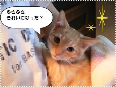 P1000693(ふさふさきれい