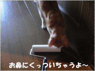 P1000816(くっついちゃう