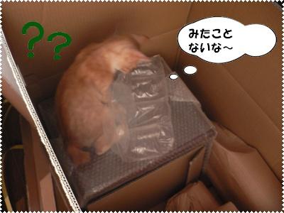 P1000884)(みたことない)