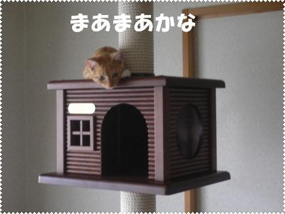 P1000894(まあまあ)
