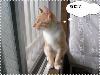P1010036(何?横顔)