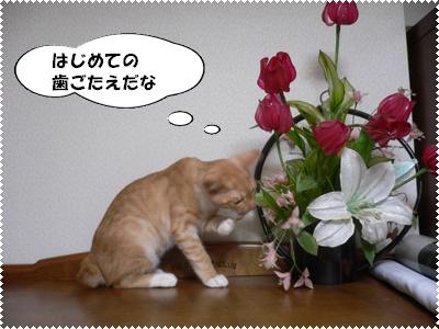 P1010050(花をかじる)