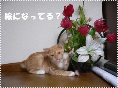 P1010053(花とレイ)
