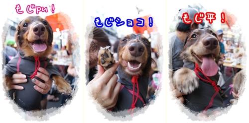 08172cats.jpg