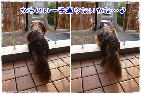 0829cats.jpg