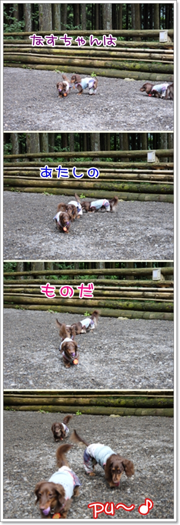 0906cats.jpg