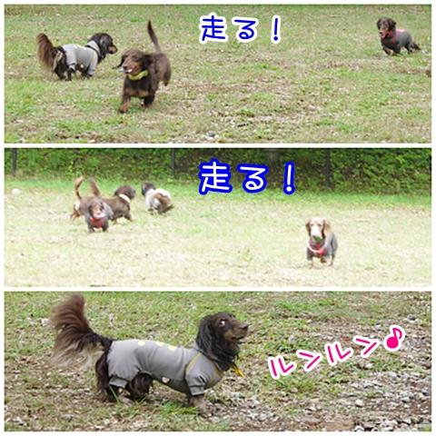 09102cats.jpg