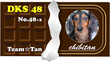 48 2 chibitan