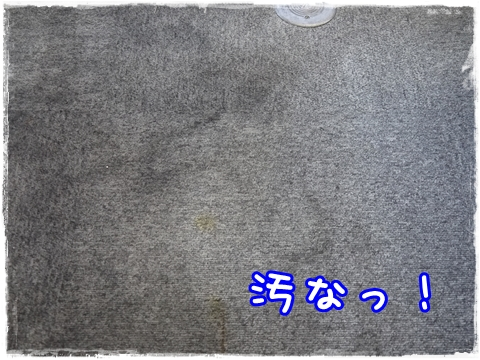 P1090230.jpg
