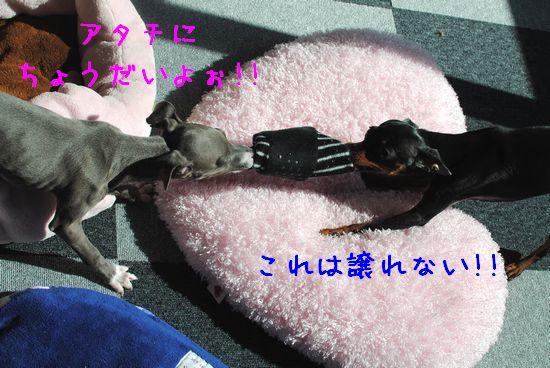 9_20110225103859.jpg