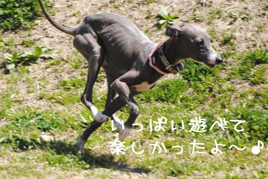 DSC_0016_20110421144709.jpg