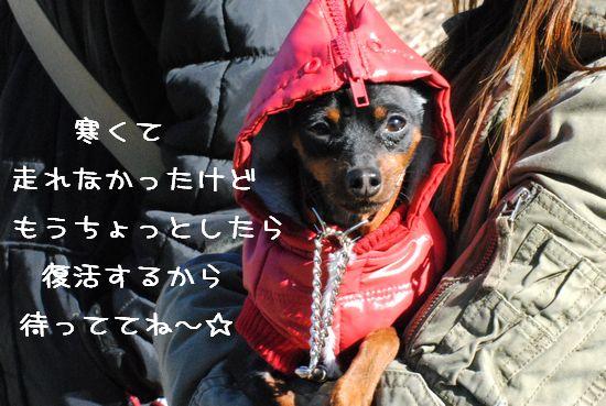 DSC_0083_20110202164906.jpg