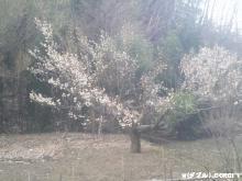 2012032505.jpg