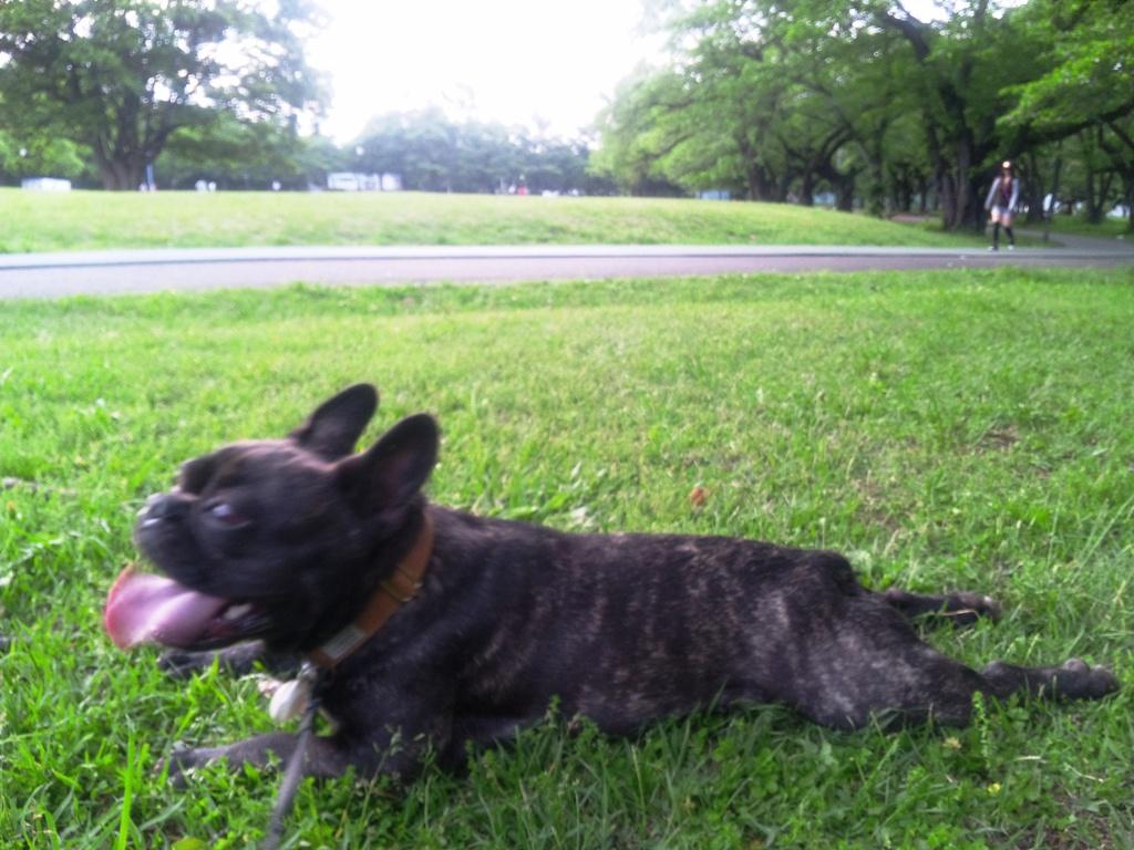 芝生でひとやすみ