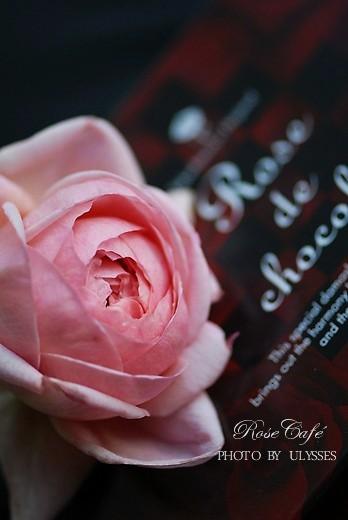 Ambridge Rose **ER