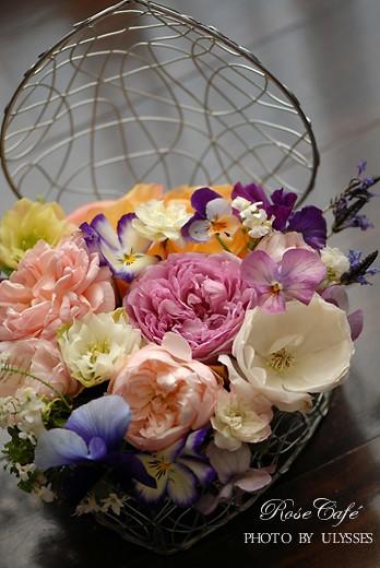 Lilac Rose** ER