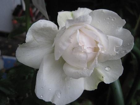 201105ボレロ2