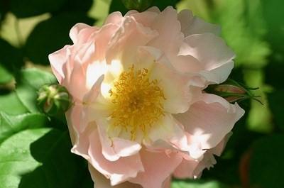 peach94.jpg