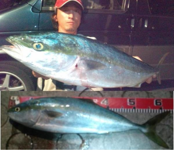 鯉メジロ_20110522003138
