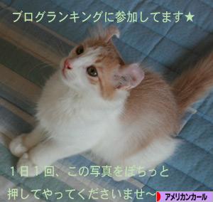 080818pochi.jpg