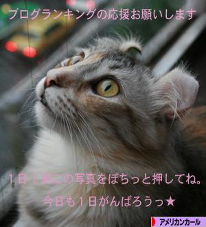 080829pochi.jpg