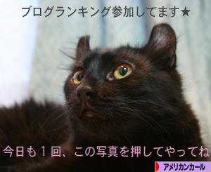 080831pochi.jpg