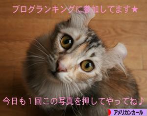 081011pochi.jpg