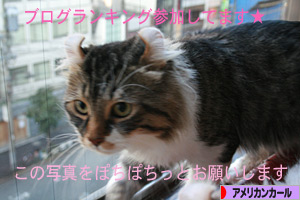 081013pochi.jpg