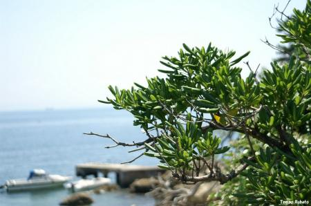 植物02。