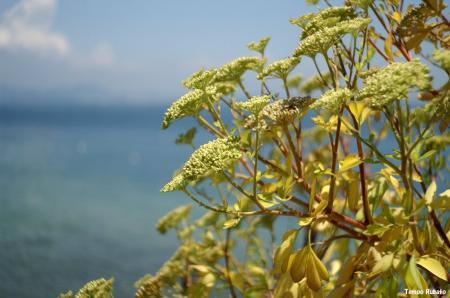植物03。