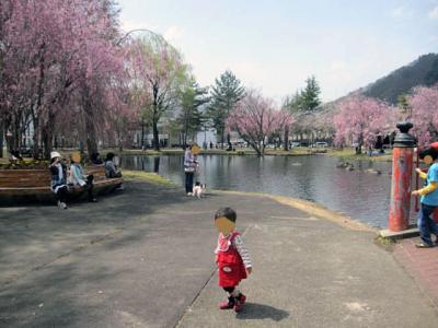 20110530ピョンテンと桜-2