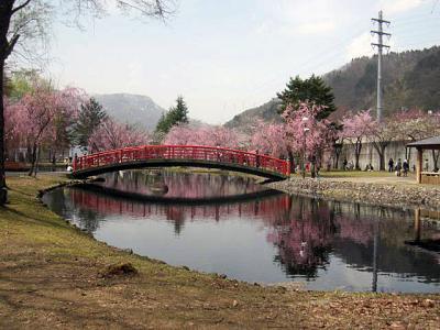 20110530湯沢の桜