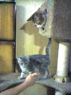 猫タワーにて