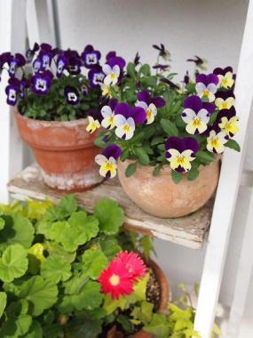 veranda garden