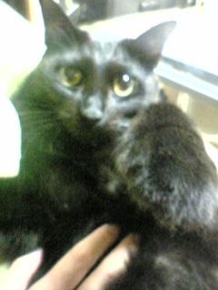 真っ黒の猫って、机の下にいると目しか見えないってホントだった(笑)