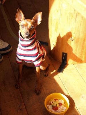 アクア@paani dog cafe (パアニドッグカフェ)