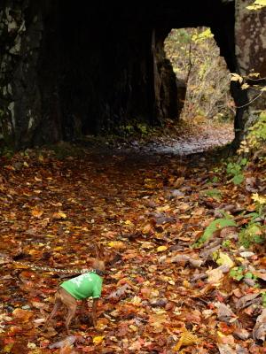 アクア@中津川渓谷へ紅葉狩り