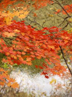 中津川渓谷へ紅葉狩り