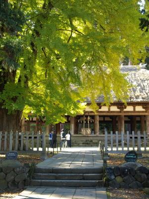 長床と大イチョウ@新宮熊野神社