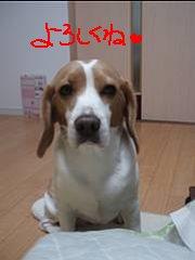 4_20090104204849.jpg