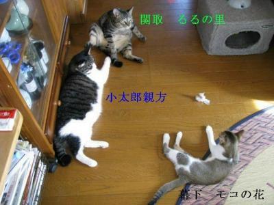 IMG_0370_sh01.jpg