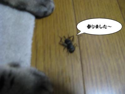 IMG_0474_1.jpg