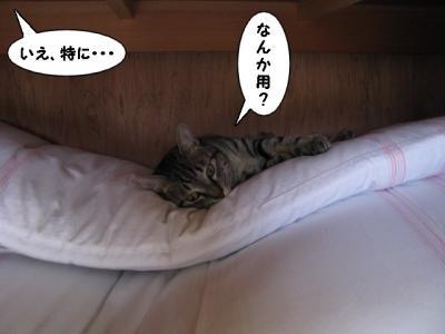 IMG_0538_1.jpg