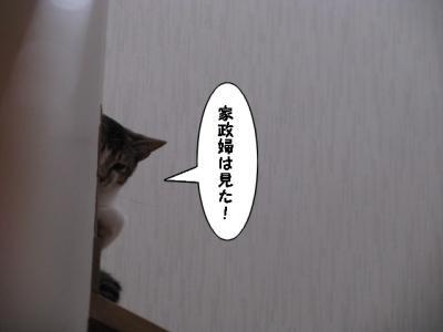 IMG_0641_1.jpg