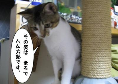 IMG_0824_1.jpg