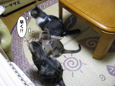 IMG_1038_1.jpg